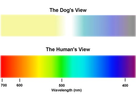 dog-vision-color-spectrum-compared-to-man
