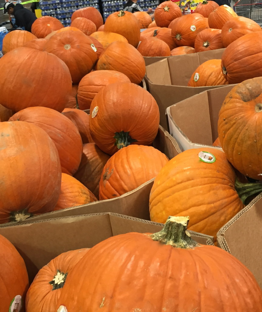 Pumpkins at Costo